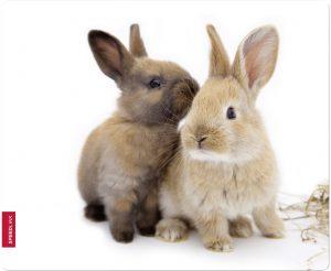 Speedlink hiirematt Silk Rabbit (SL-6242-Ra)