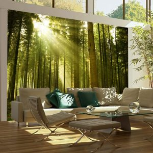 Fototapeet - Pine forest