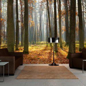 Fototapeet - Autumn trees