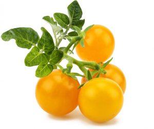 Click & Grow Smart Garden refill Kollane tomat 3tk